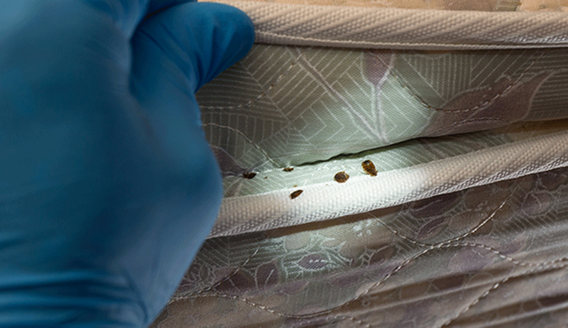 bed-bug-closeup pest control Columbia sc