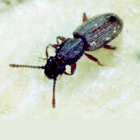 pest control Columbia sc