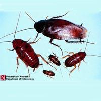 roach pest control pest control Columbia sc