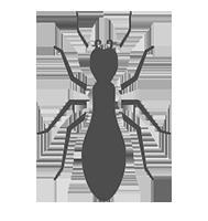 exterminator columbia sc