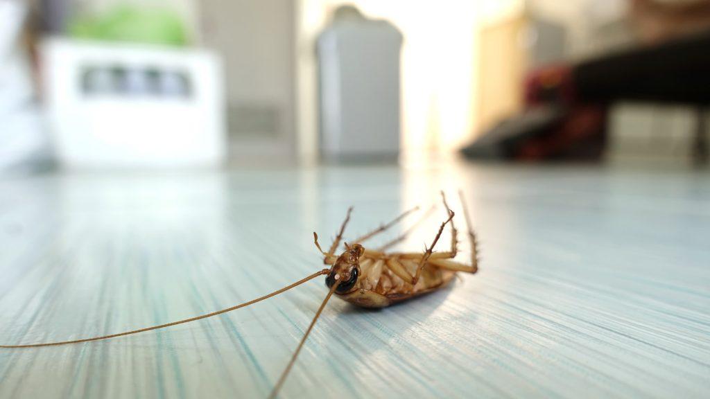 pest problem