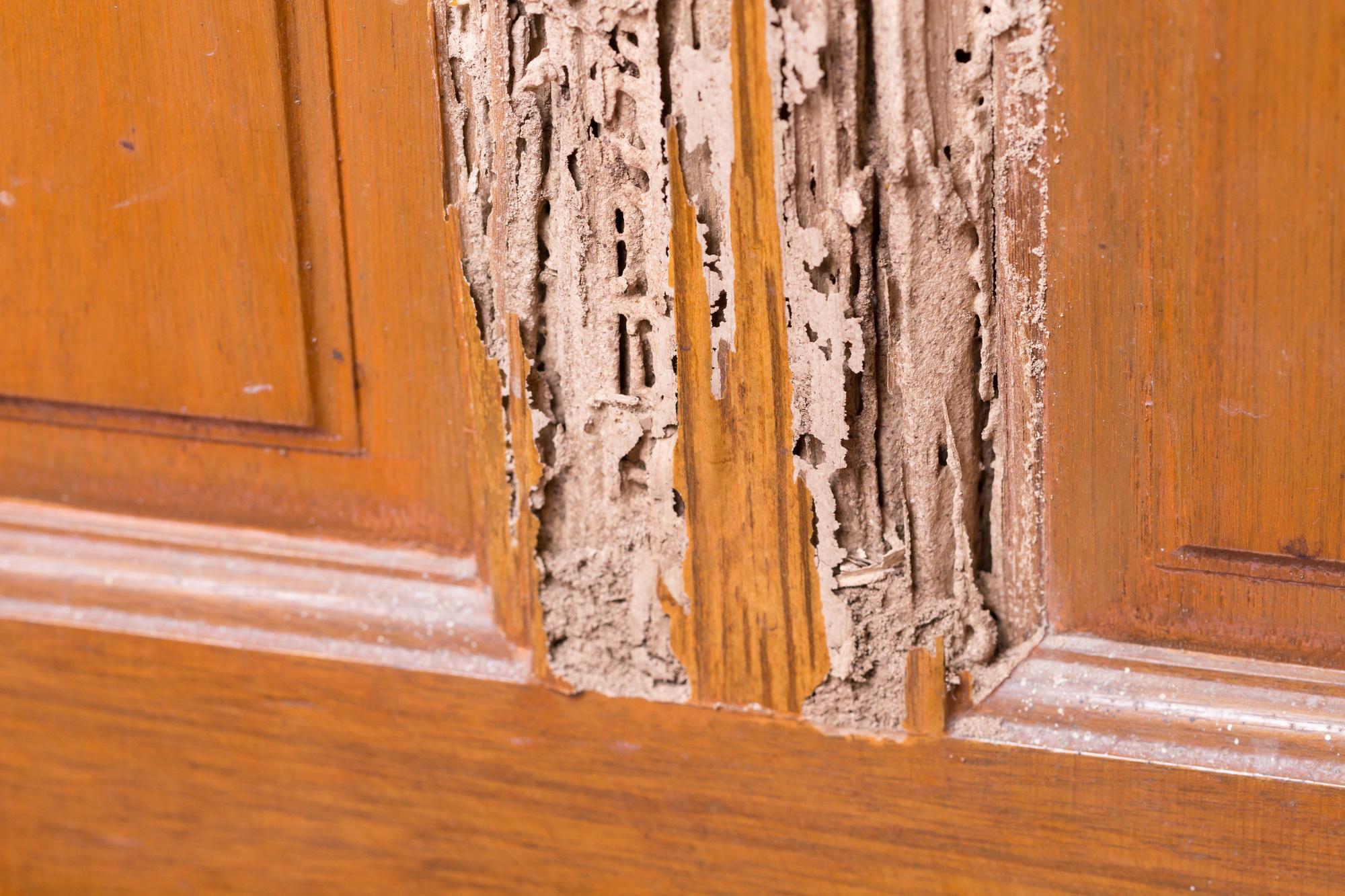 termite inspection columbia sc